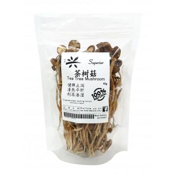 Tea Tree Mushroom